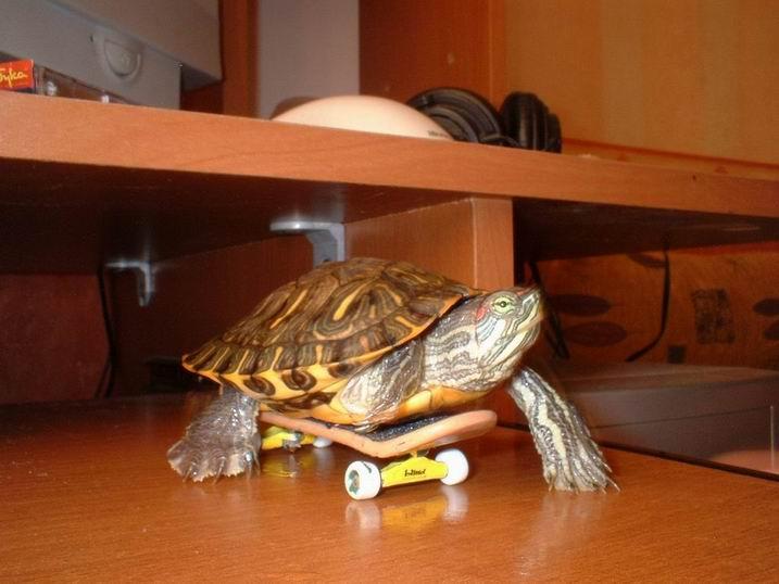Как сделать игрушку для черепах 495